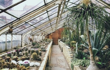 cacti-in-greenhouse