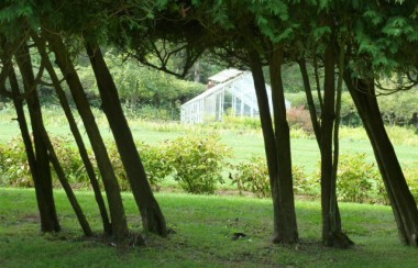 glasshouse-through-trees