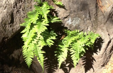 a-rare-green-fern-hidden-in-rocks