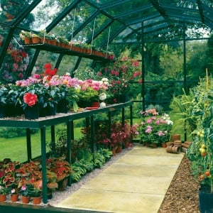 Greenhouse Staging and Shelving Inside a Hartley Botanic Glasshouse