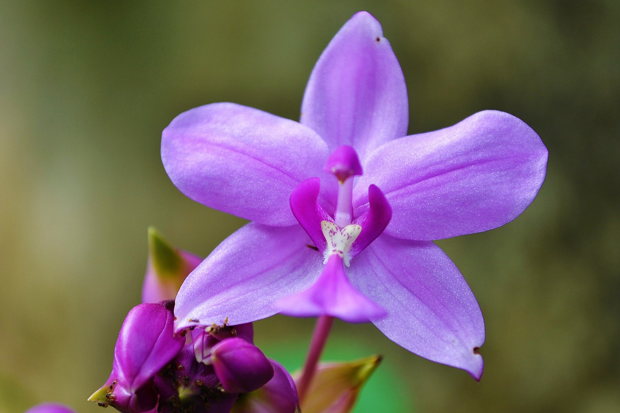 orchid-213171_1280