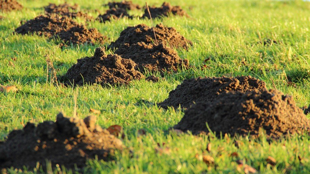 Moles 'can benefit gardeners'