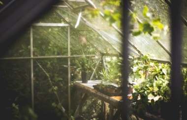 sun-shining-through-greenhouse