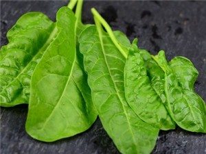 Swiss-Chard-Perpetual-Spinach-SC107-DSC_2084