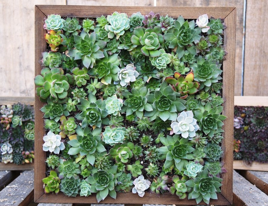 Robin demonstrated how to plant vertical garden boxes, creating lively patterns with colorful rooted cuttings.