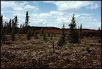 270 million acres of natural peat lands in Canada