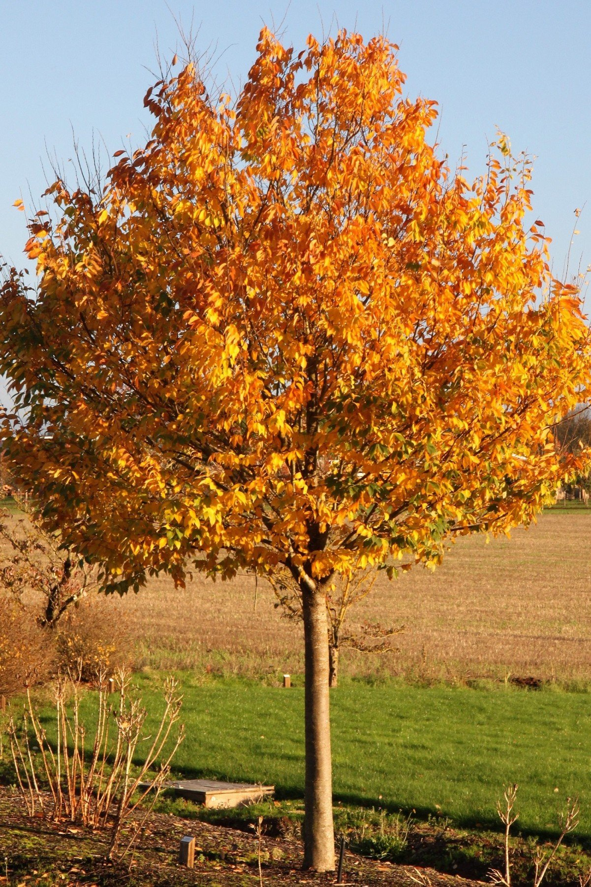 From Acer To Zelkova New Small Trees Solve Big Problems