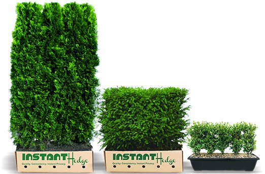 Instant Privacy Hedges Now You Can Buy Time By Mary Kate Mackey