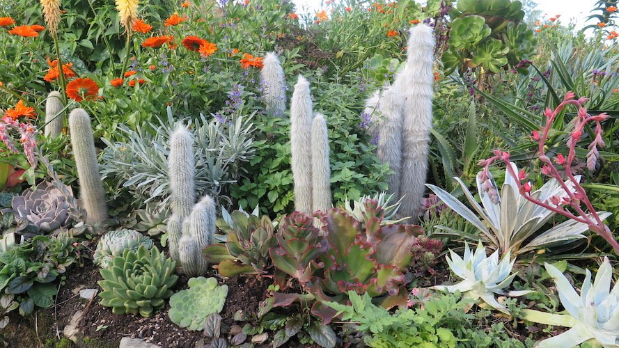 Cold Hardy Cactus For Extreme Gardening